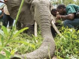 Protect Tanzania's Threatened Elephants