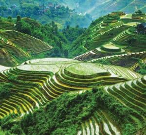 Banawe Rice Terraces. Source: Imgur