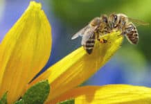 Bees Must be protected for the future of our food