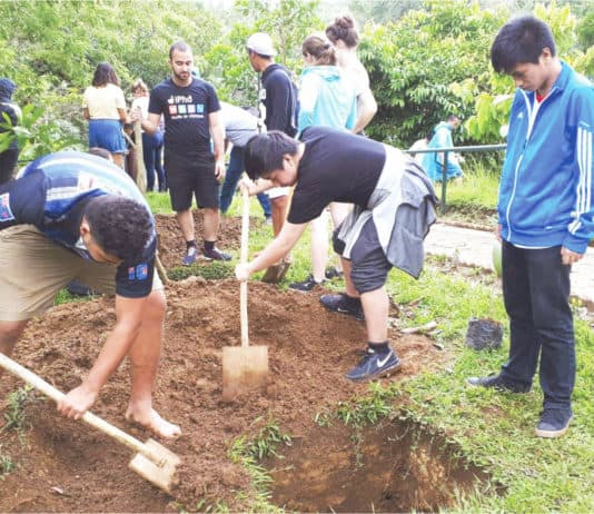 Youth helping in tree planting projects